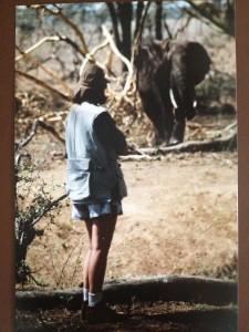 Kenya 1996 - too close to bull elephant